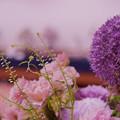 Photos: 花遊び展 6-3