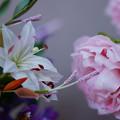 Photos: 花遊び展 6-4