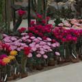 写真: サボテンの花19-4