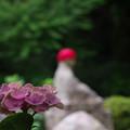 紫陽花12-3