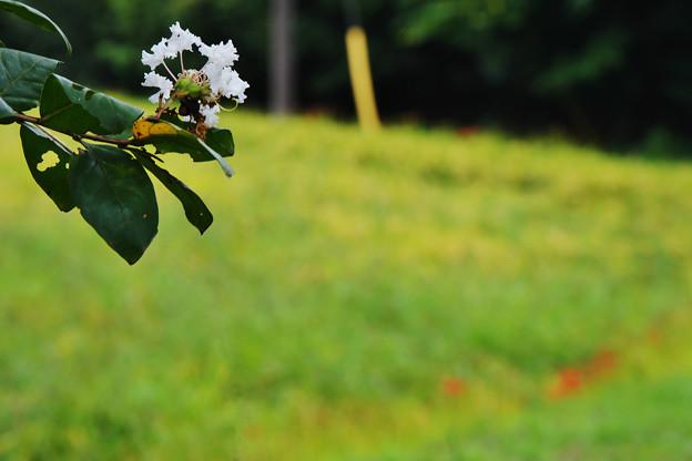 写真: 夏から秋へ