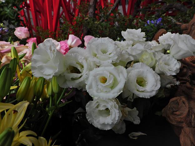ゆめ花の宴_1