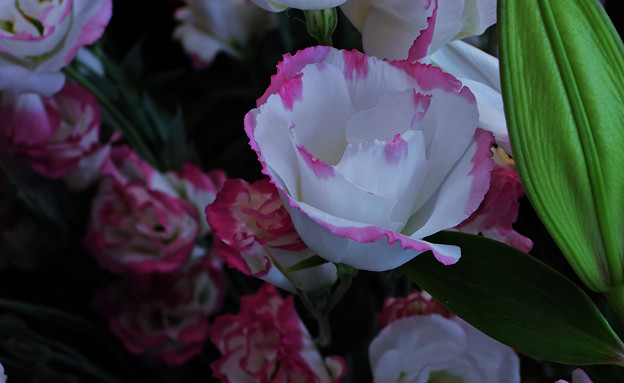 ゆめ花の宴_4
