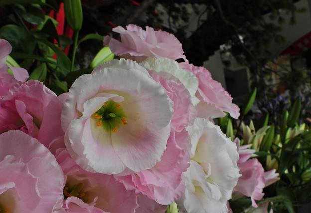ゆめ花の宴_6