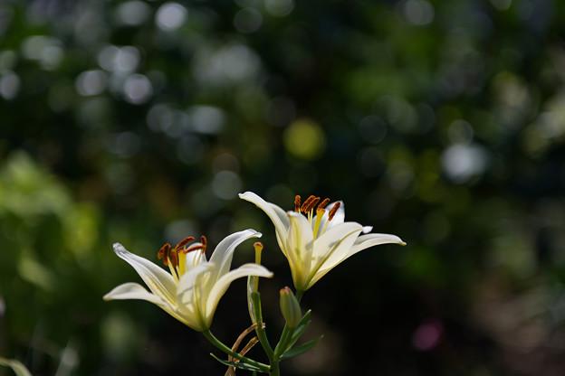 花通り16-4