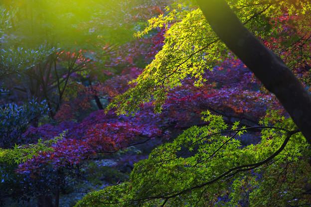秋の彩り1-4