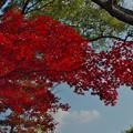 紅葉_毛利氏庭園3-3