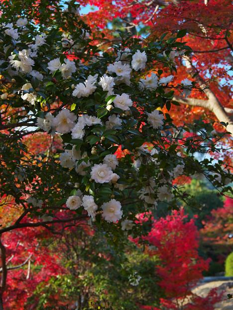 秋の彩り4-3