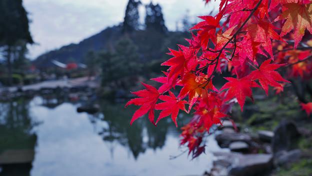 秋の彩り5-1