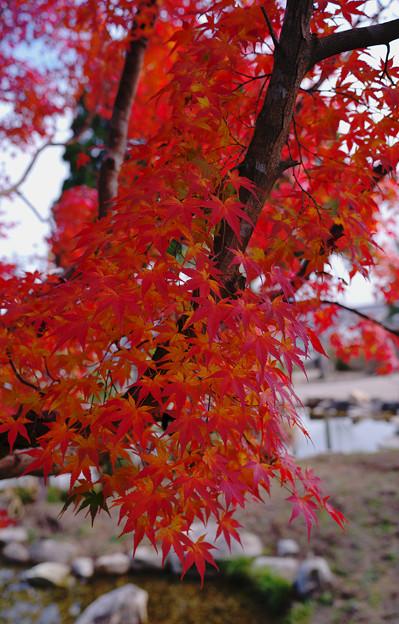 秋の彩り5-2