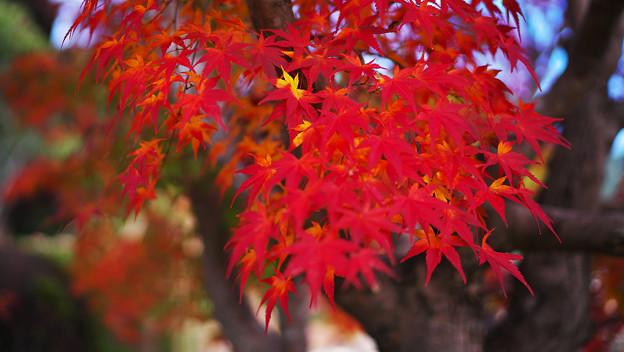 秋の彩り6-1