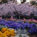 Photos: 春・ときわ公園2-2