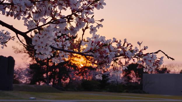 春・ときわ公園2-5