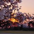 Photos: 春・ときわ公園2-5