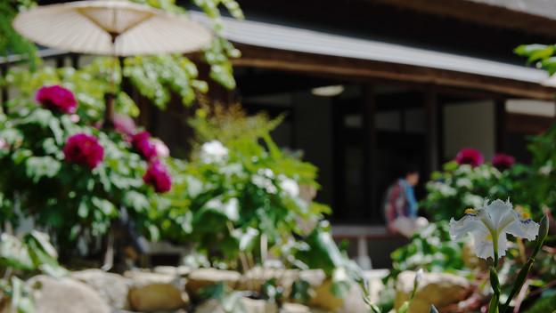 牡丹祭り3-2