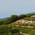 Photos: 大平山・山頂公園のツツジ1-1