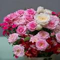 春バラ展1-3