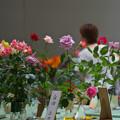 春のバラ展3-3