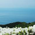 Photos: 大平山・山頂公園のツツジ5-4