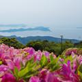 Photos: 大平山・山頂公園のツツジ6-1