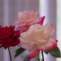 春のバラ展6-1