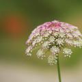 初夏の花2-1