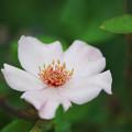 初夏の花2-2