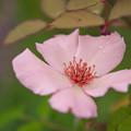 初夏の花2-3