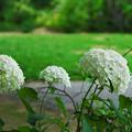 Photos: 初夏の花4-1