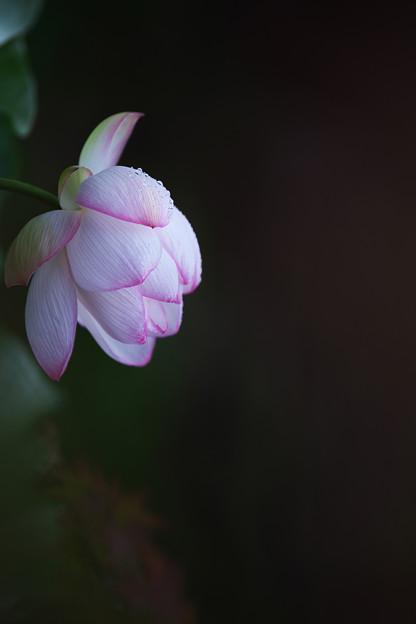夜明けの孫文蓮3-5