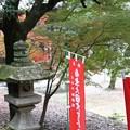Photos: 伽耶院の紅葉(3)