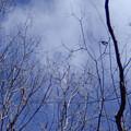 八国山緑地(雑木林の空)