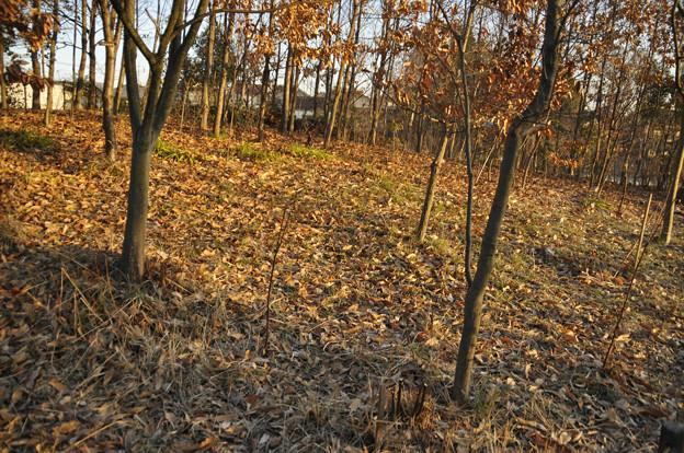 2月19日、朝陽の雑木林