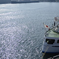 Photos: 2月28日朝、大さん橋から-ロイヤルウィングと氷川丸