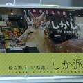 Photos: 2月28日、「御苗場vol.18横浜」-トークセッション(3)