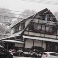 写真: 雪つよし
