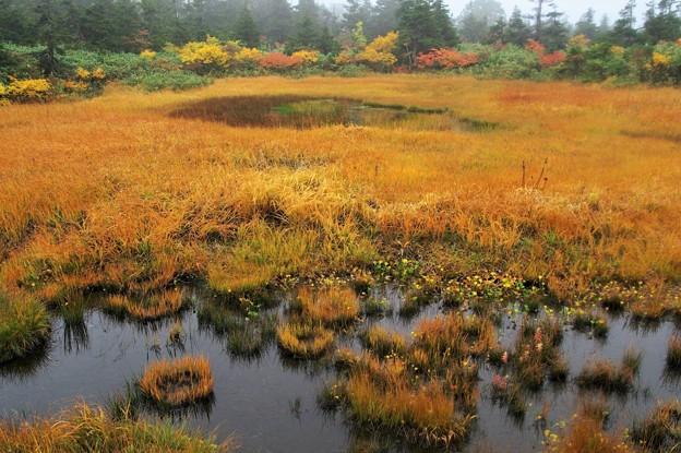 Photos: クサモミジの三石湿原