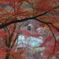 Photos: 紅葉と電車
