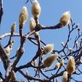 写真: 春の目覚め