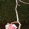 写真: ひと枝
