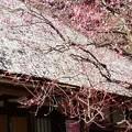 写真: 春の気配