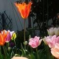 写真: 春の歌声♪