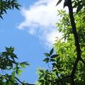 写真: 青空に美しく