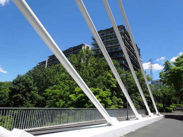 写真: 陸橋の上から   1