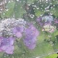 Photos: 傘の中から