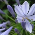 写真: 上品な色の花