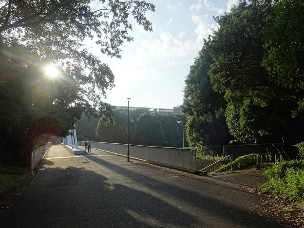 猛暑日の朝