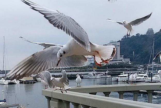 Photos: カモメ舞う