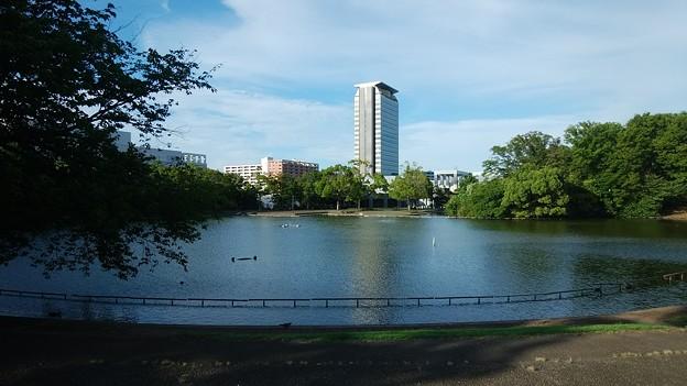 写真: 大池とビル