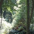 写真: 彩る雑木林